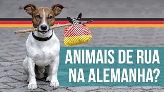 ANIMAIS NA ALEMANHA: TUDO QUE VOCÊ SEMPRE QUIS SABER 🐱🐶  - Alemanizando Responde