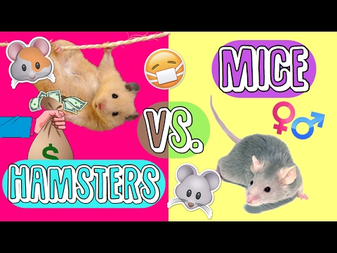 HAMSTERS vs MICE (as pets!) | Which do I get? 🐹🐭