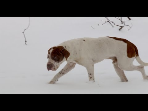 Cold Weather and its Effects on Animals this Winter