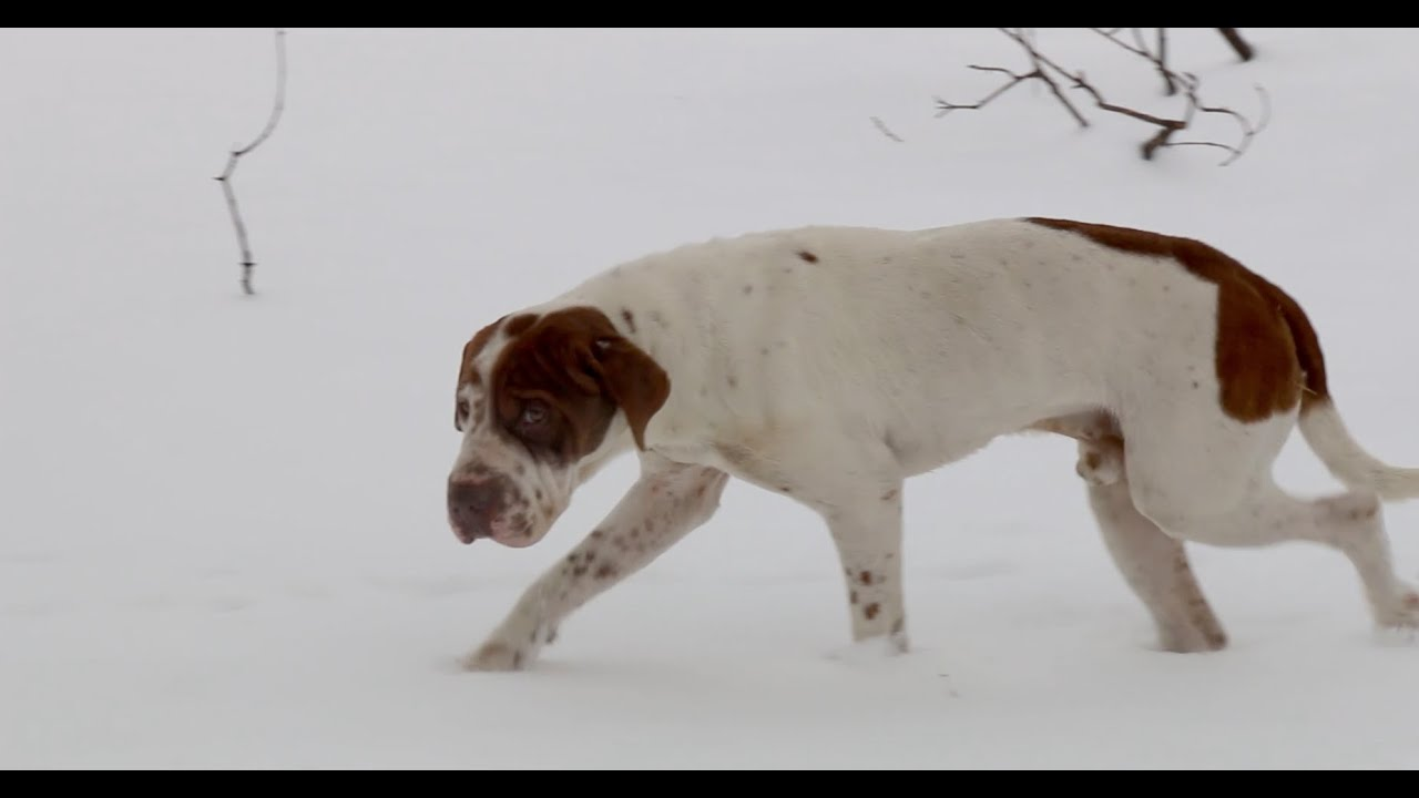 Cold Weather And Its Effects On Animals This Winter Youtube