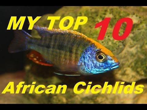 AFRICAN CICHLIDS | MY TOP 10