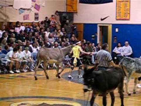 Donkey Basketball #3
