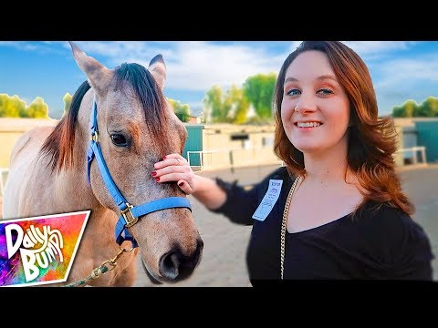 Download Youtube: Looking For A Horse! 🐴