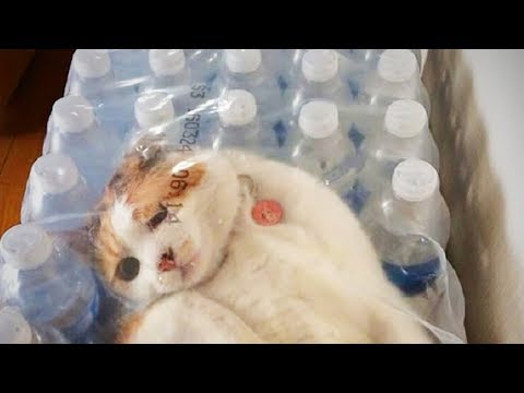 Cute Cats 😂 Funny Cats Fails (Part 1) [Funny Pets]