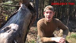 Rozpoznawanie gatunków drzew iglastych