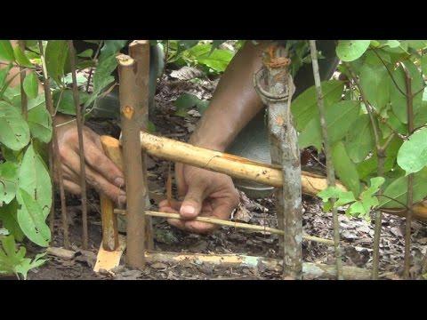 Trap'Hmong people make trap สอนทำกับดัก ( Qhia cuab ntxiab Hmoob)