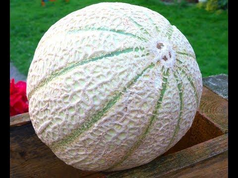 So erkennt man, ob Melonen reif sind