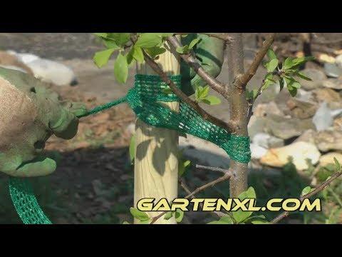 Atemberaubend Obstbaum anbinden / Obstbaum festbinden - YouTube @ED_11