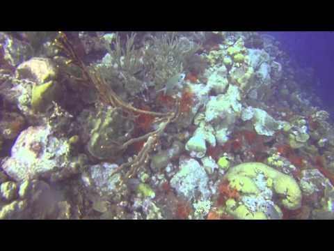 Bonaire Dive Video May 2014