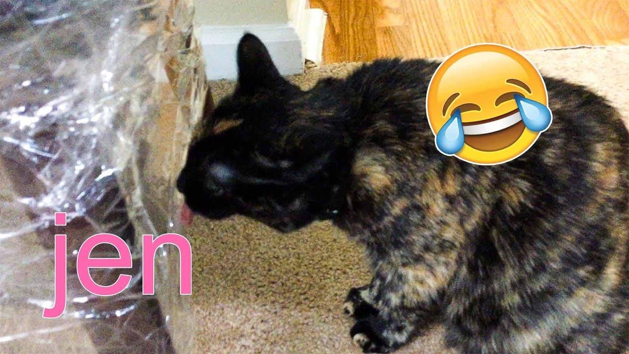 watch my cat lick plastic for 3 minutes crazy cat files jen