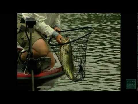 Texas Bass - Texas Parks And Wildlife [Official]