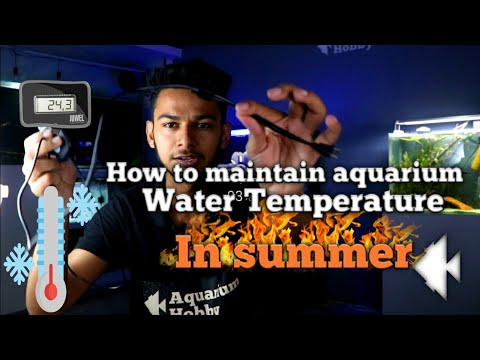 How To Maintain Aquarium Water Temperature In Summer