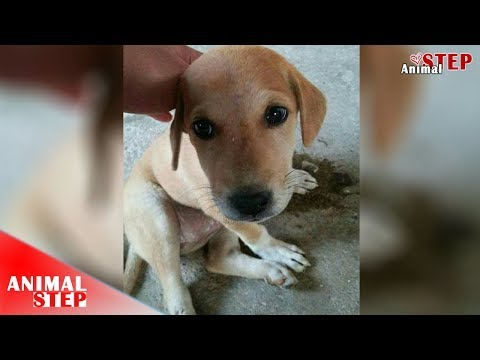Stray Puppy Rescued From The Street