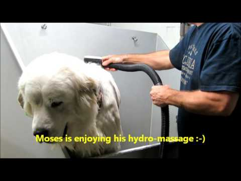 Bathe your big hairy dog in just 10 minutes!!