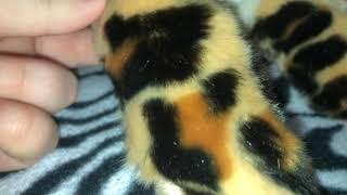 Leosco 12  Leopard Plush Review
