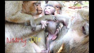Ah! It nearly die baby monkey, It looks so hurt newborn monkey beat by mommy, It pity baby monkey