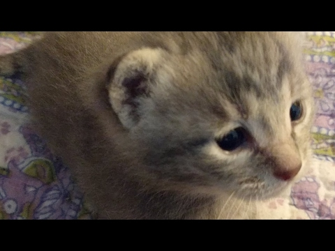 Close Up Kittens 2017-05-06