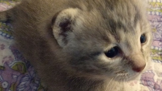 Close Up Kittens 2017-05-06 thumbnail