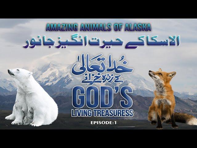 خدا تعالیٰ کے زندہ خزانے| الاسکا کے حیرت انگیز جانور۔Amazing Animals Of Alaska   Urdu Version 01