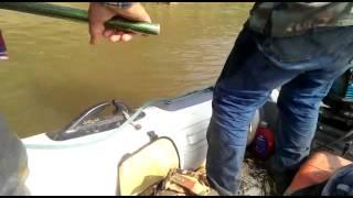 Pesca de surubi de 12 kiloj en el rio ichilo puert
