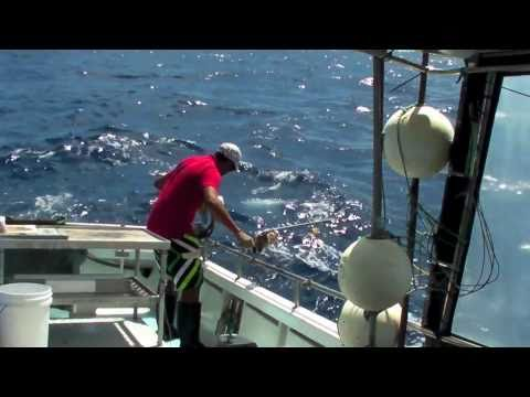 Deep Drop Commercial - Target Fishing