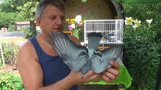 Gołębie ! extra dla wymagających hodowców tel. 728 465 939