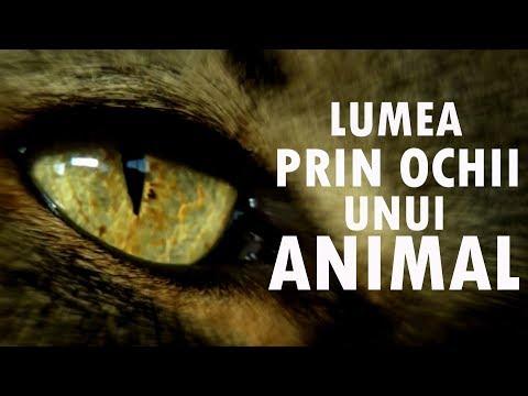 Lumea Prin Ochii Unui Animal