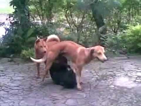 download video sex hewan vs manusia