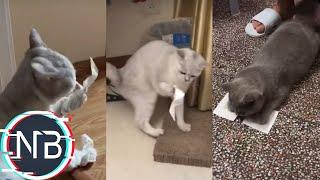 Tik Tok Chó Mèo - Troll Dán Băng Keo Hoàng Thượng Mèo P2 | 抖音#09