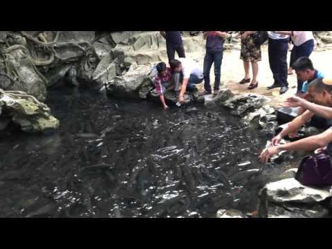 Suối cá thần Cẩm Lương, Cẩm Thủy, Thanh Hóa