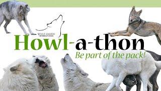 Howl-a-thon 2020