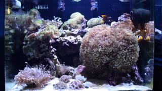 update 38 gallon nuvo reef tank by innovative marine