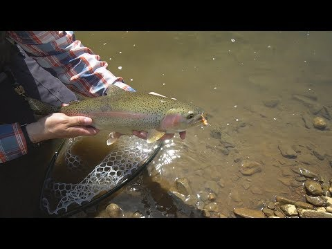 Big RAINBOWS On HOPPERS! -- Part 1