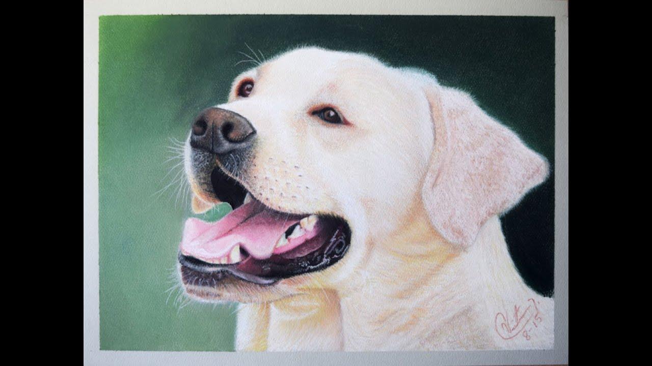 Como dibujar y pintar un perro paso a paso con gises - Pintar con acrilicos paso a paso ...