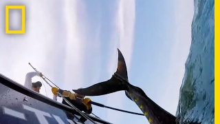 A Little Luck? | Wicked Tuna