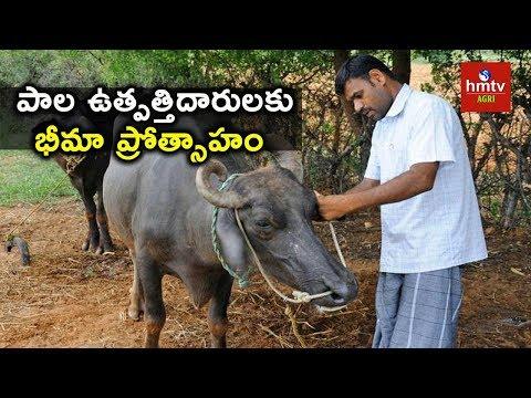 Cattle Insurance Full Details   hmtv Agri