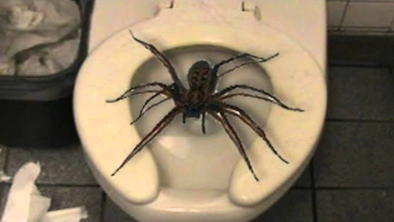 Top 10 Insects And Spiders You Won't Believe Exist