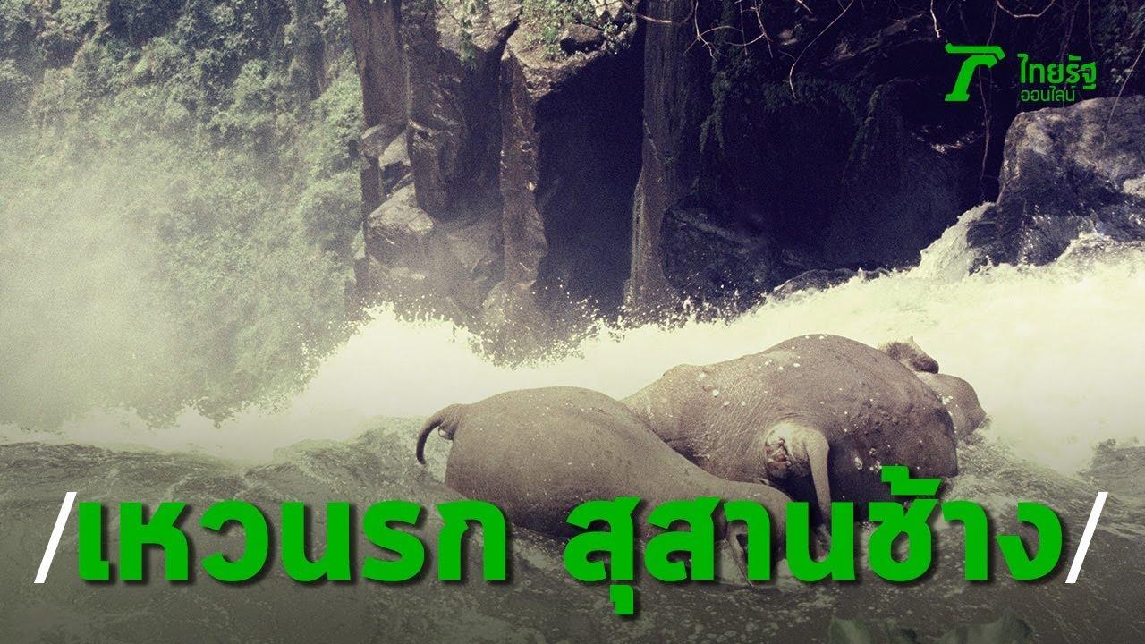 3 นาทีคดีดัง : เส้นทางชีวิต สุสานช้างป่า น้ำตกเหวนรก | Thairath Online