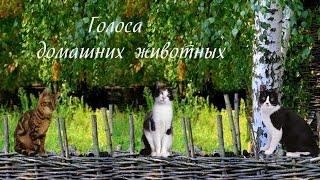 Голоса домашних животных для детей (voices of domestic animals)