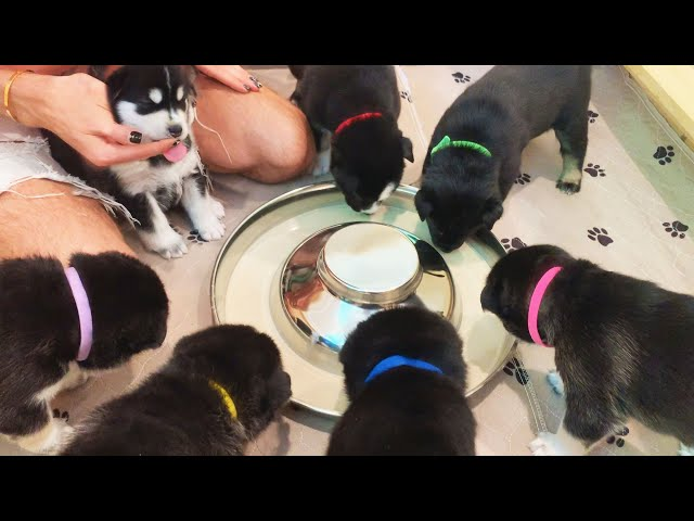 My Puppies React to Food for the very First Time!