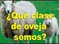 ¿Qué clase de oveja somos?
