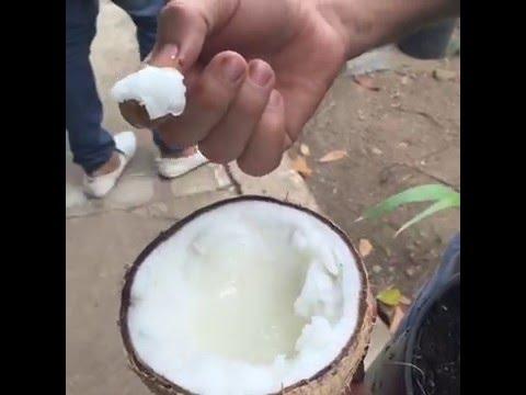Macapuno Coconut in the Philippines