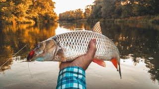 Большой Голавль на микроколебалки. Рыбалка сплавом по реке  Ворона.