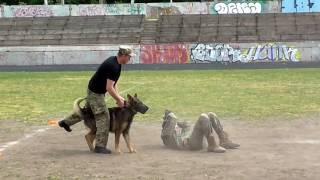 Сбила с ног - собака защищает хозяина