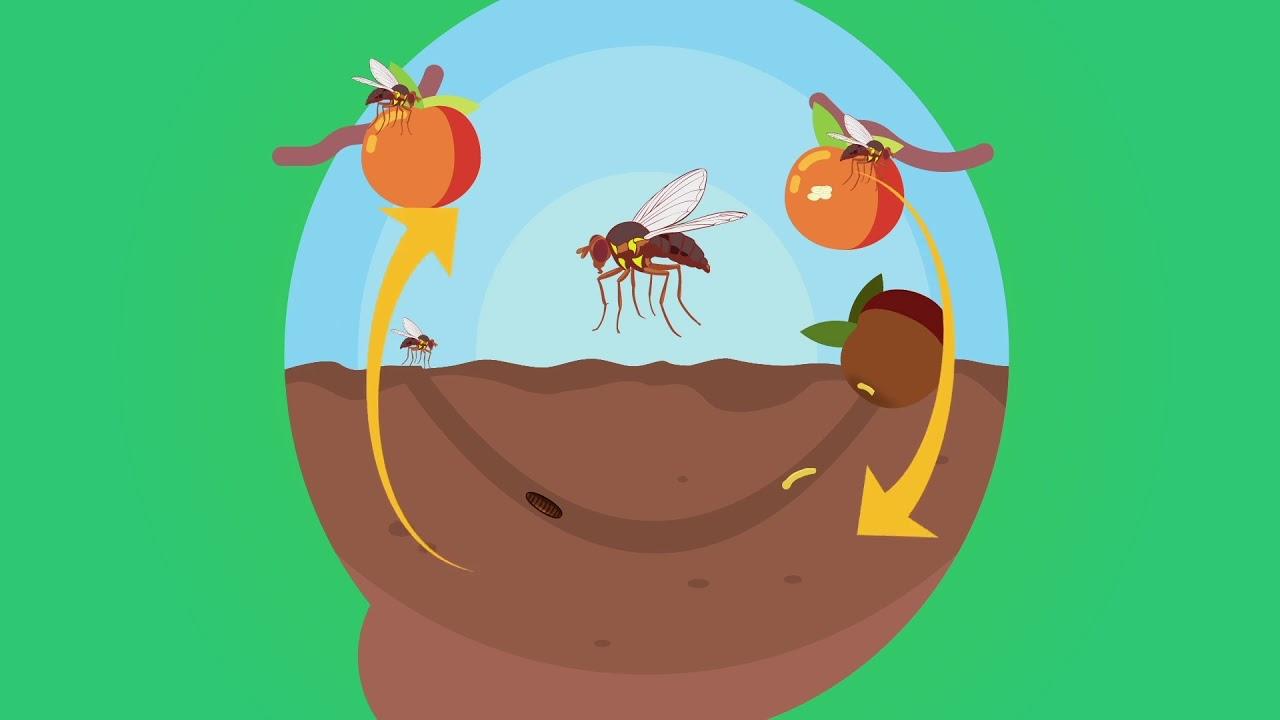 Gardeners – Prevent Fruit Fly