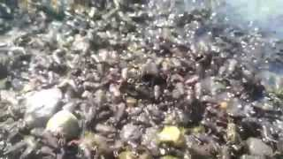 raining frogs!! End of days. 1000's of frogs.