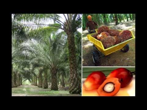 Earthwatch Palm Oil Lecture