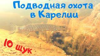 Подводная охота в Карелии на щуку