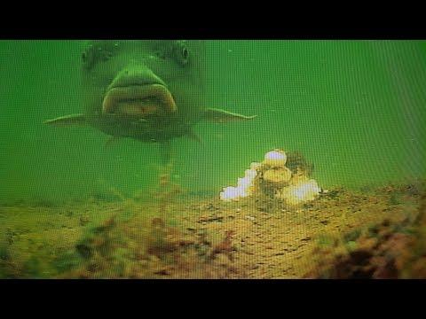 USA Carp Fishing - Looking Back Part 2 - 2017