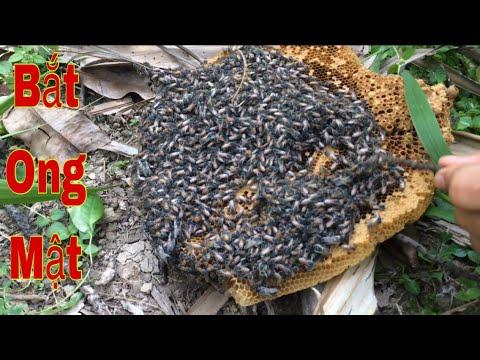 Bắt ong mật ăn tại chỗ. Quá đã.